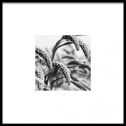 Jungle Rice Poster in the group Posters & Prints / Black & white at Desenio AB (8911)