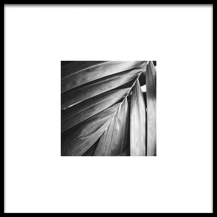 Palm Tree Leaf Poster in the group Posters & Prints / Black & white at Desenio AB (8956)