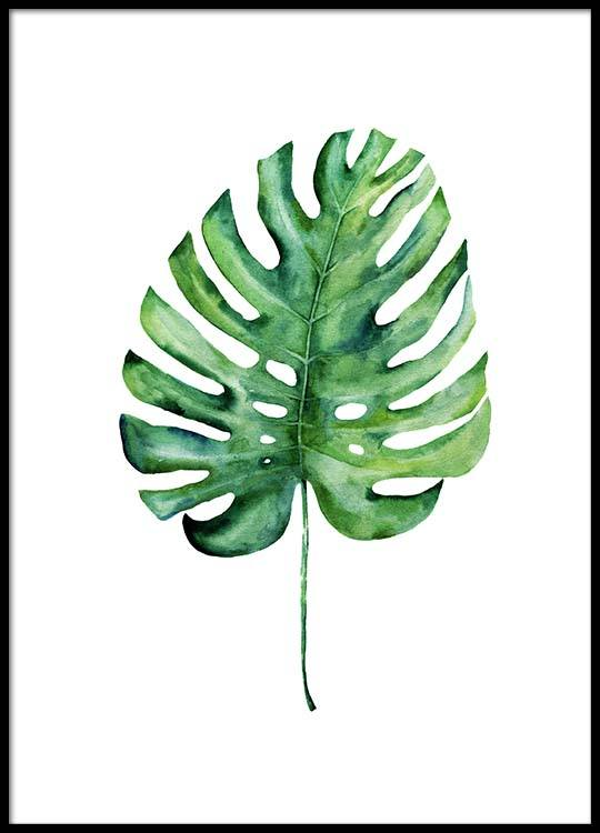Monstera Aquarell One Poster