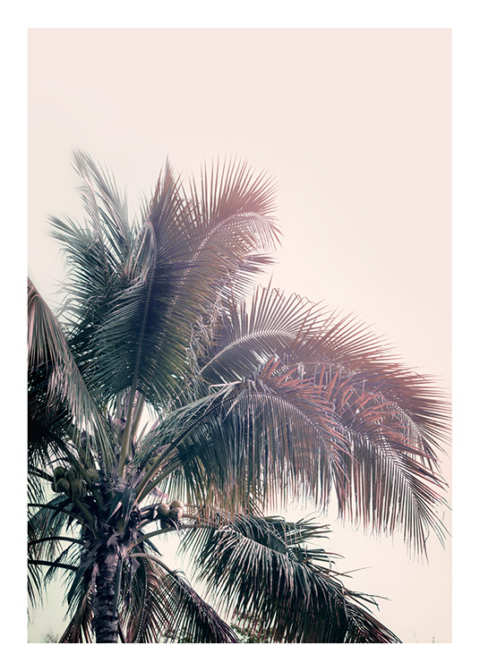 A Palm Tree Dream Poster / Palms at Desenio AB (10169)