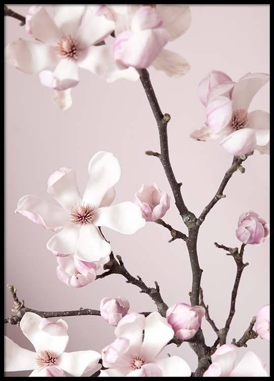 Pink spring flower poster mightylinksfo