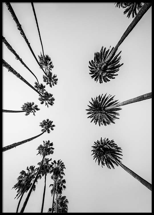 palm trees above poster