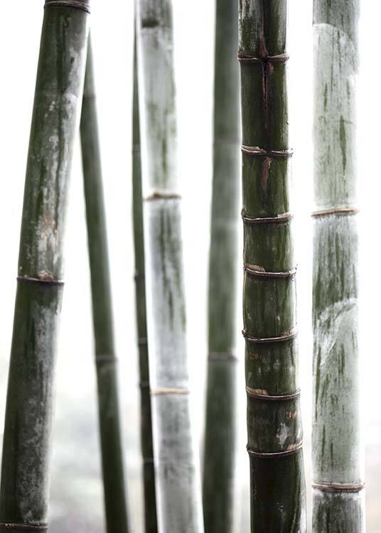 Bamboo No1 Poster / Photography at Desenio AB (10287)
