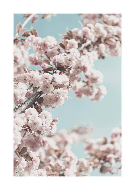 Cherry Blossom No4 Poster / Photography at Desenio AB (10429)