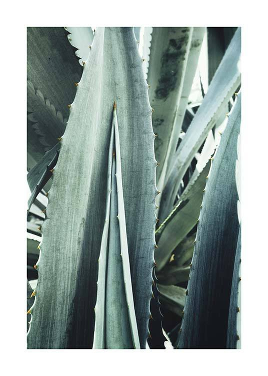 Agave Close Up Poster / Photography at Desenio AB (10430)