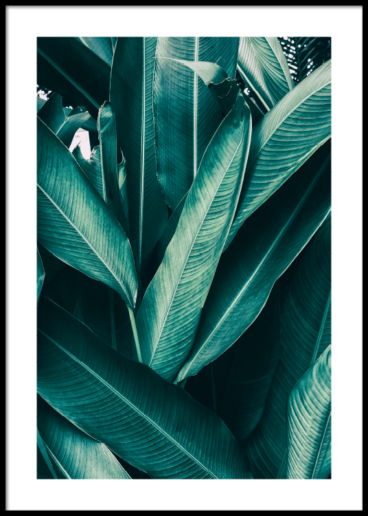 Tropical Leaves No1 Poster Discover 75 free tropical leaves png images with transparent backgrounds. tropical leaves no1 poster