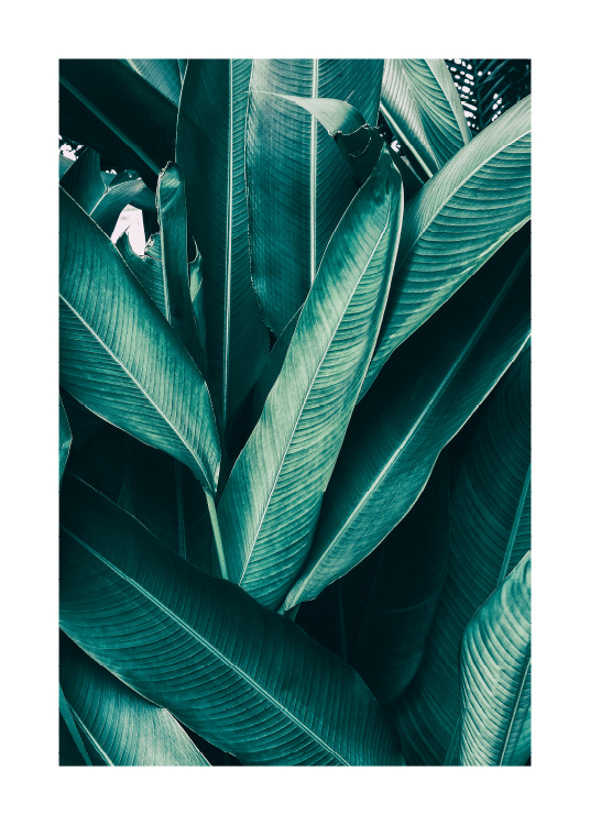 Tropical Leaves No1 Poster / Photography at Desenio AB (10439)