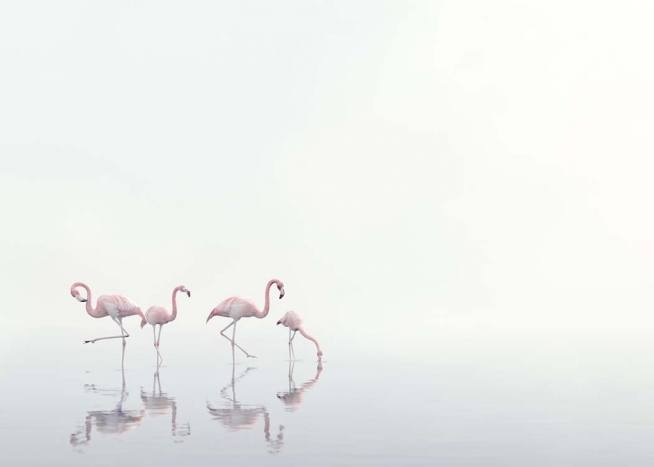 Flamingos on Foggy Water Poster / Nature at Desenio AB (10447)