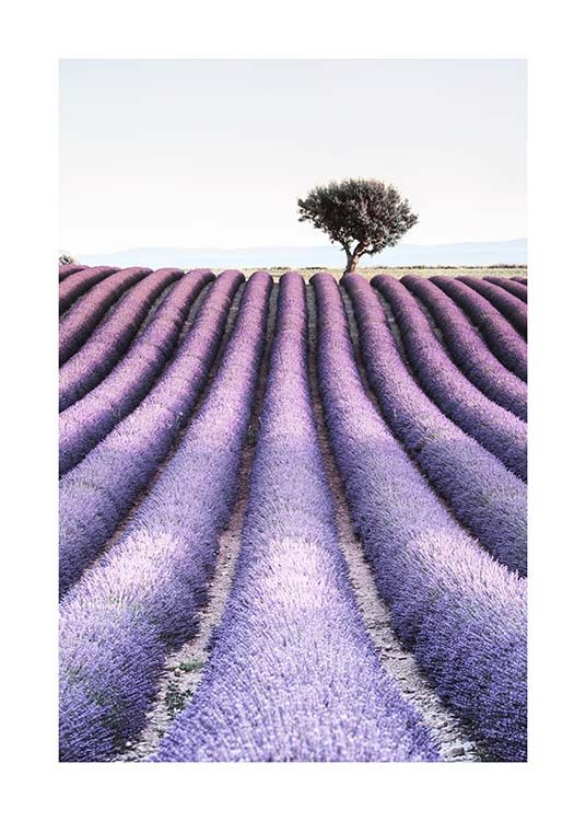 Provence Poster / Nature at Desenio AB (10462)