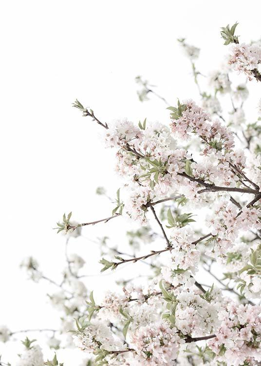Spring Blossom No3 Poster / Photography at Desenio AB (10565)