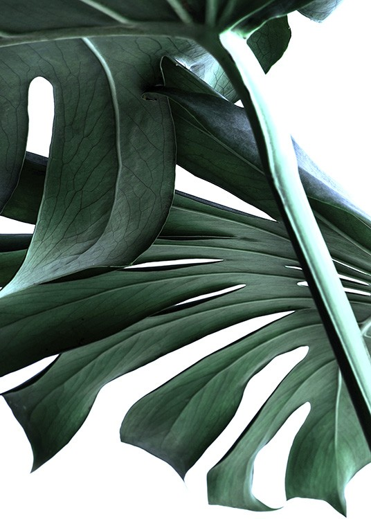 Big Monstera No.2 Poster / Photography at Desenio AB (10737)