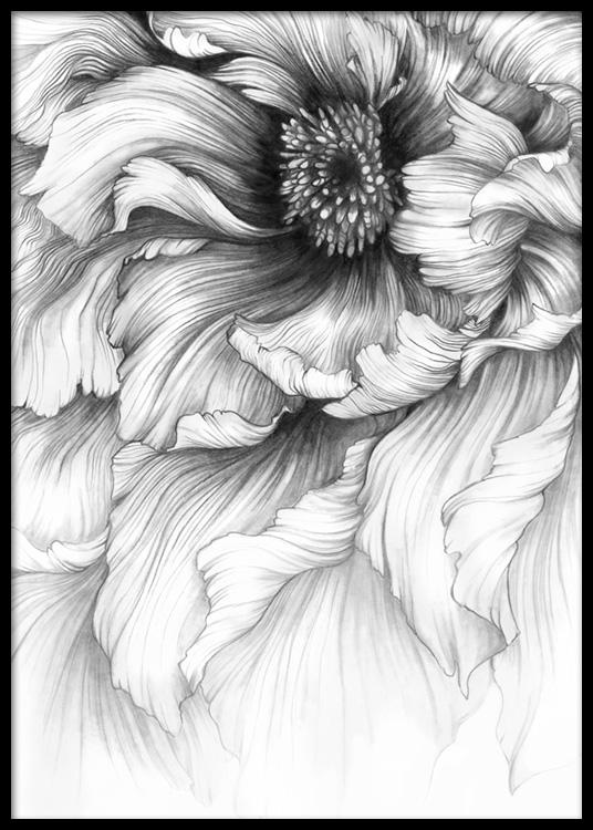 Graphite flower poster mightylinksfo