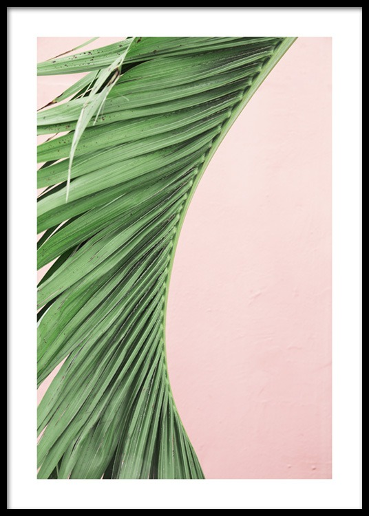 Pink And Green Palm No1 Poster In The Group Posters Prints Botanical At Desenio