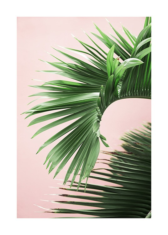 Pink and Green Palm No2 Poster / Photography at Desenio AB (10856)