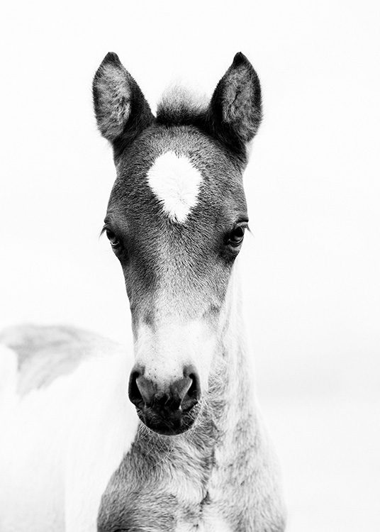 Horse Foal Poster / Black & white at Desenio AB (10877)