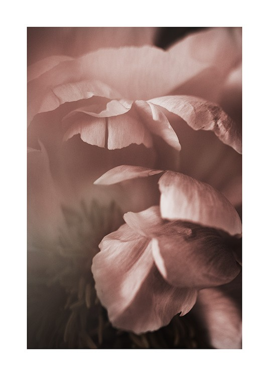 Soft Peony Poster / Photography at Desenio AB (10992)
