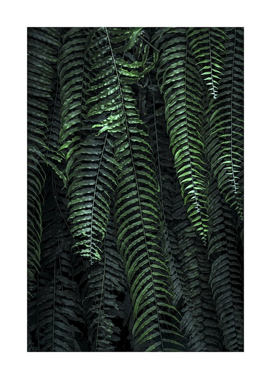 Forest Fern Poster / Photography at Desenio AB (11000)