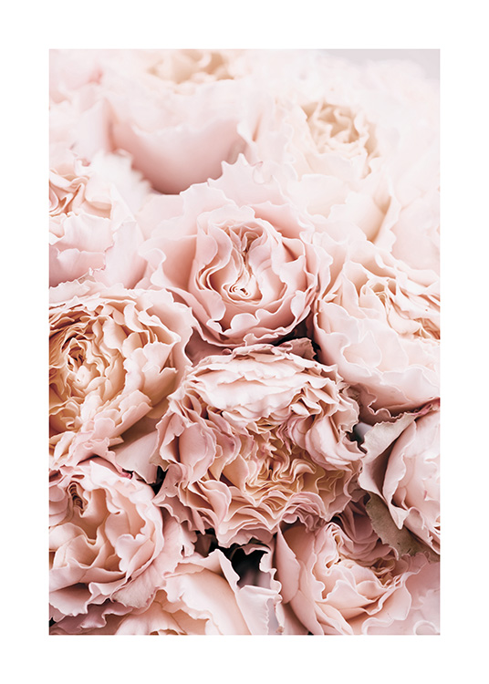 Bouquet of Roses Poster / Photography at Desenio AB (11189)