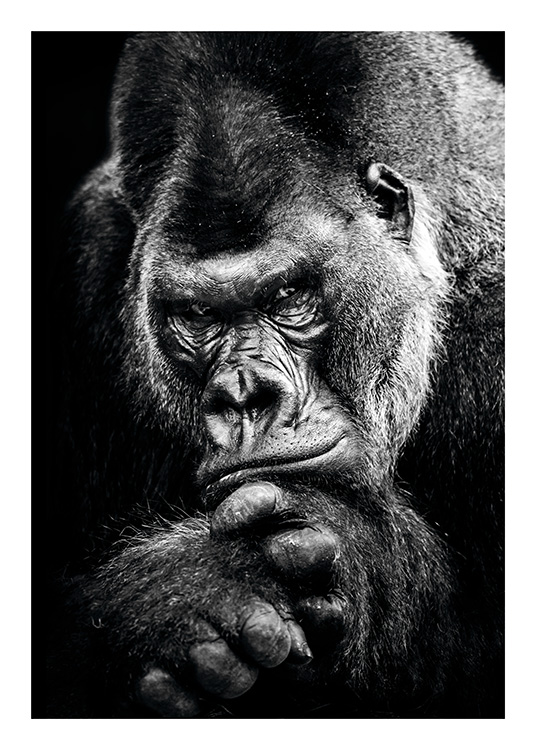 Gorilla Poster / Black & white at Desenio AB (11255)