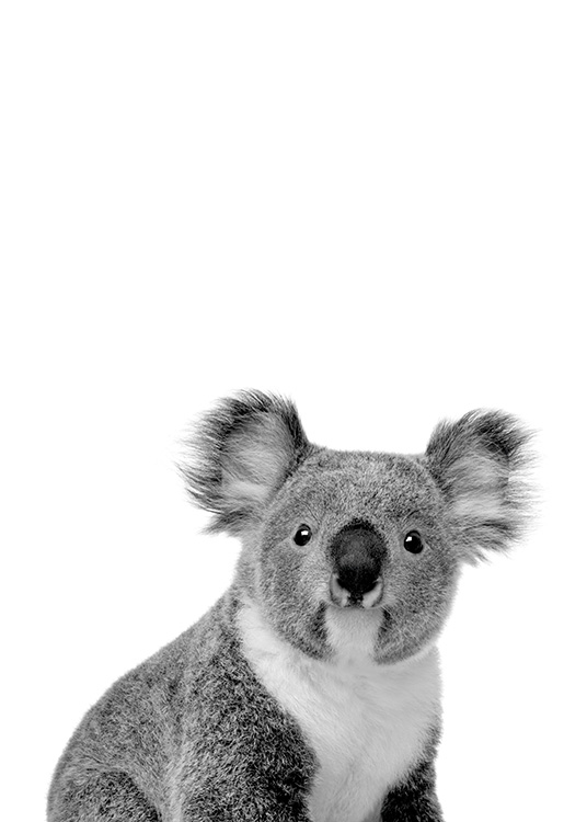 Koala Poster / Black & white at Desenio AB (11256)
