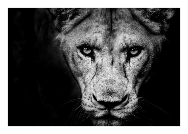 Lioness Close Up Poster / Black & white at Desenio AB (11259)