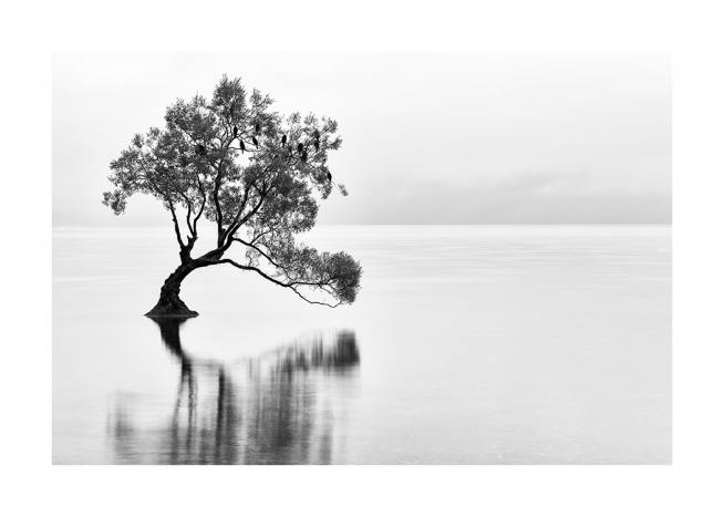 Lonely Wanaka Tree Poster / Nature at Desenio AB (11487)