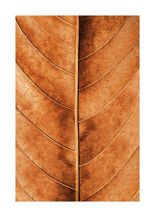 Autumn Leaf Poster / Nature at Desenio AB (11575)