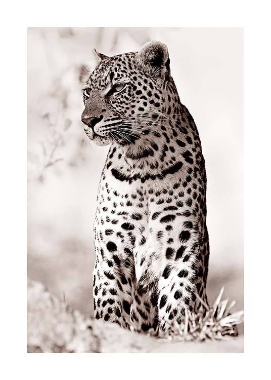 Leopard in the Wild Poster / Photography at Desenio AB (11622)