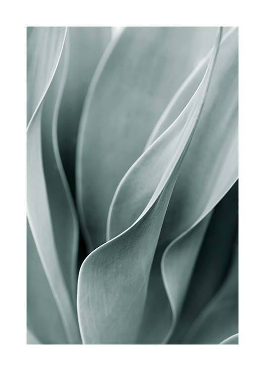 – Photograph of the light green leaves of an agave plant