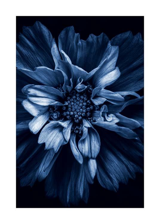 Blue Anemone Poster / Photography at Desenio AB (11663)