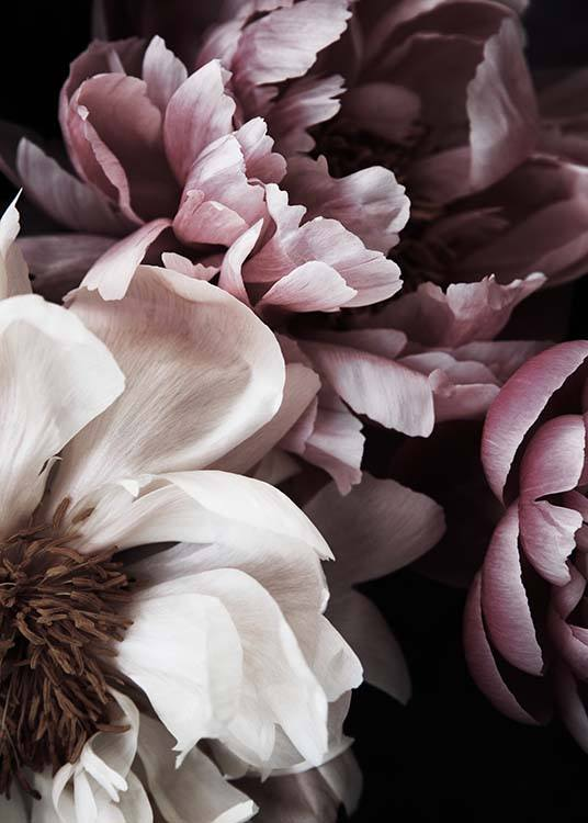 Dreamy Peony No1 Poster / Photography at Desenio AB (11775)