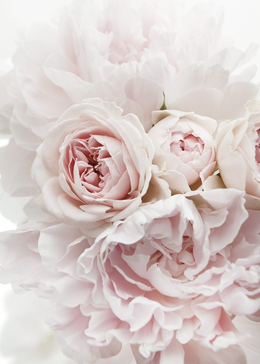 – Photograph of a bunch of peonies and roses in light pink