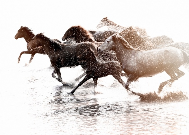 Running Horses Poster / Photography at Desenio AB (11861)