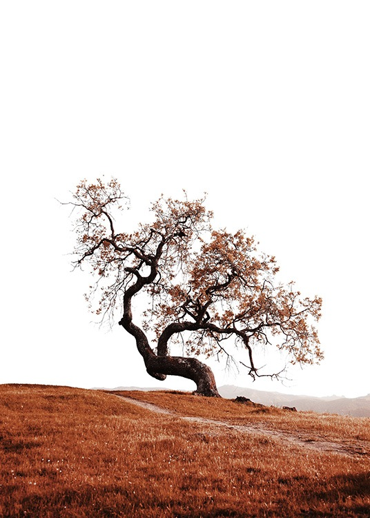 Tree on Hill Poster / Nature at Desenio AB (11869)