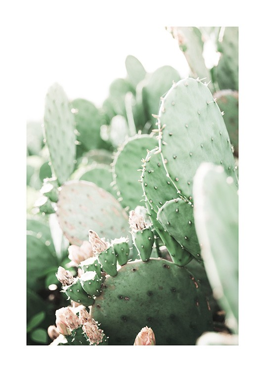 Prickly Pear Cactus Poster / Photography at Desenio AB (11892)