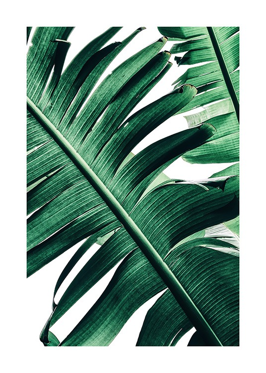 Banana Palm Leaves No2 Poster / Photography at Desenio AB (12053)
