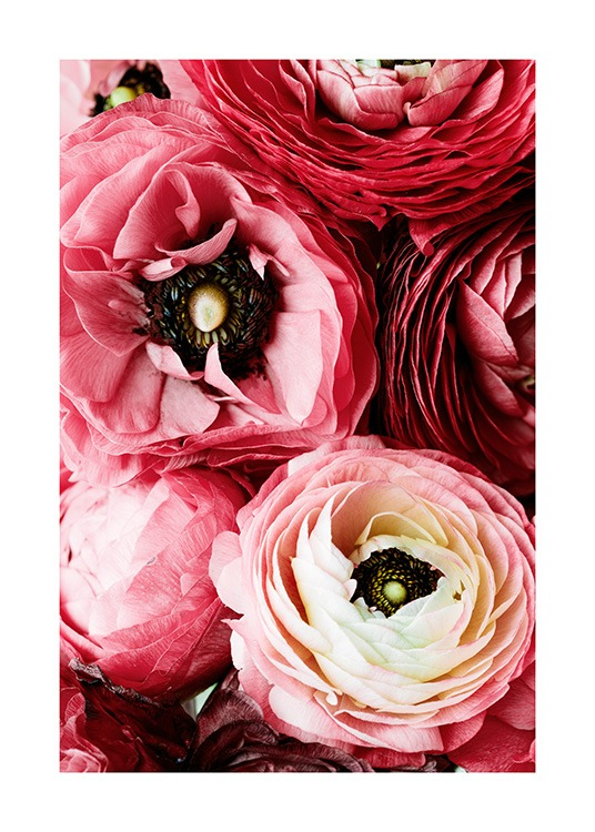 Bouquet of Pink Ranunculus Poster / Photography at Desenio AB (12108)