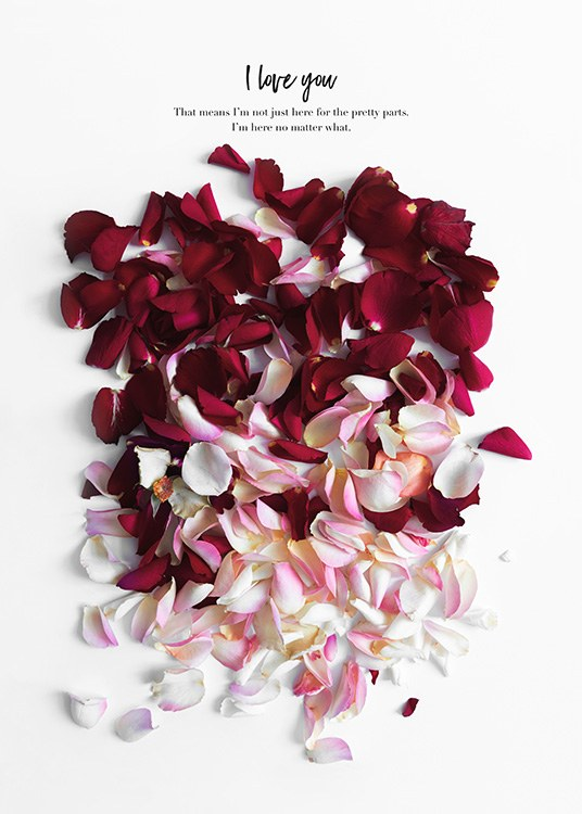 Rose Petals Poster / Art prints at Desenio AB (12144)