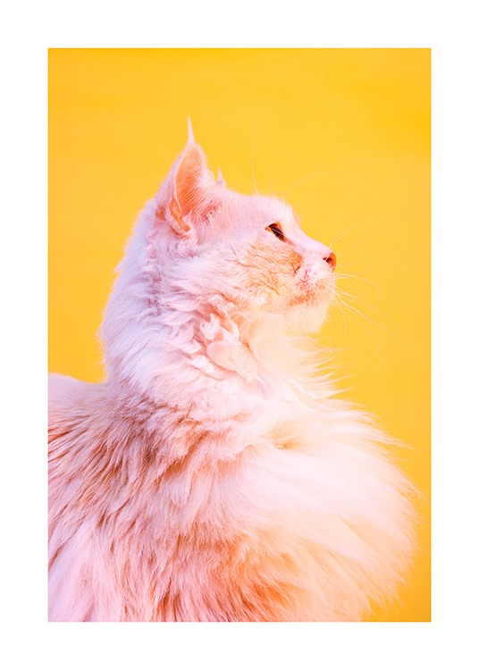 Pink Cat Poster / Photography at Desenio AB (12227)
