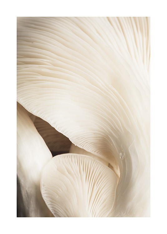 Beige Mushrooms Poster / Photography at Desenio AB (12397)