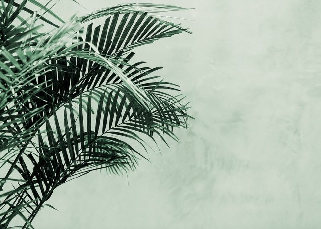 Palm Tree Wall Poster / Botanical at Desenio AB (12412)