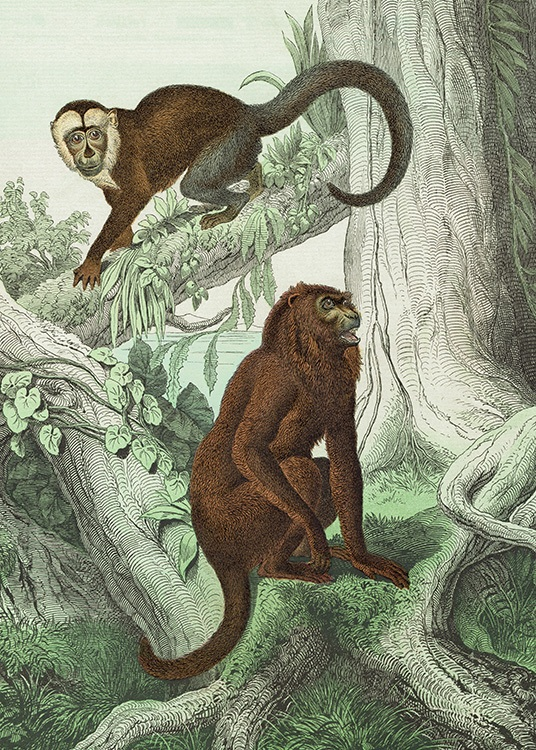 Vintage Monkeys No2 Poster / Vintage at Desenio AB (12556)