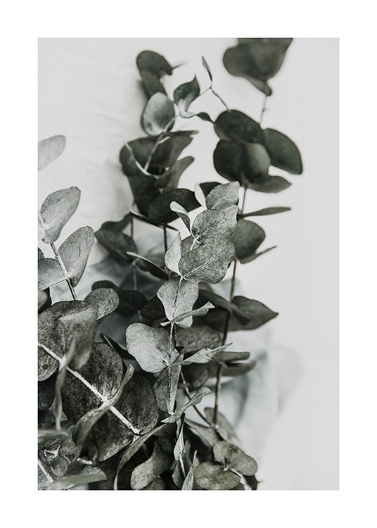 Eucalyptus Bouquet No2 Poster / Photography at Desenio AB (12582)