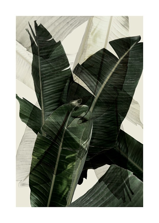 Banana Leaf Shades No2 Poster / Photography at Desenio AB (12586)