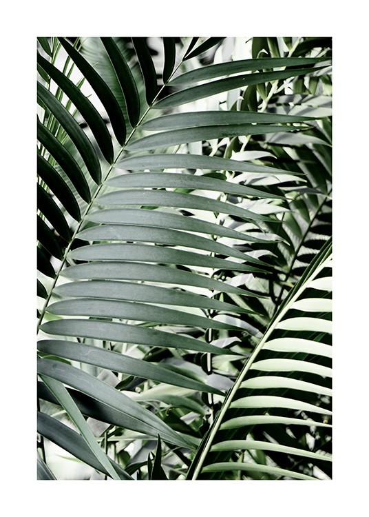 Green Palms Poster / Photography at Desenio AB (12644)