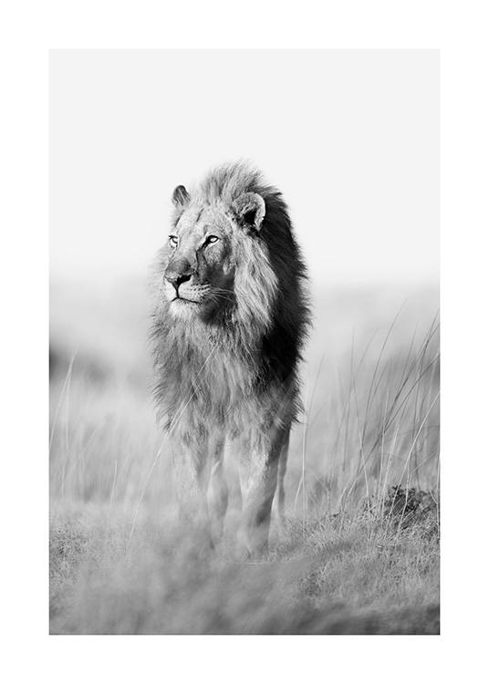 The King of the Jungle Poster / Black & white at Desenio AB (12885)