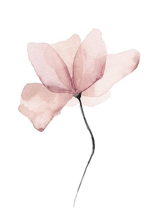 – Watercolor painting of a pink flower on a white background