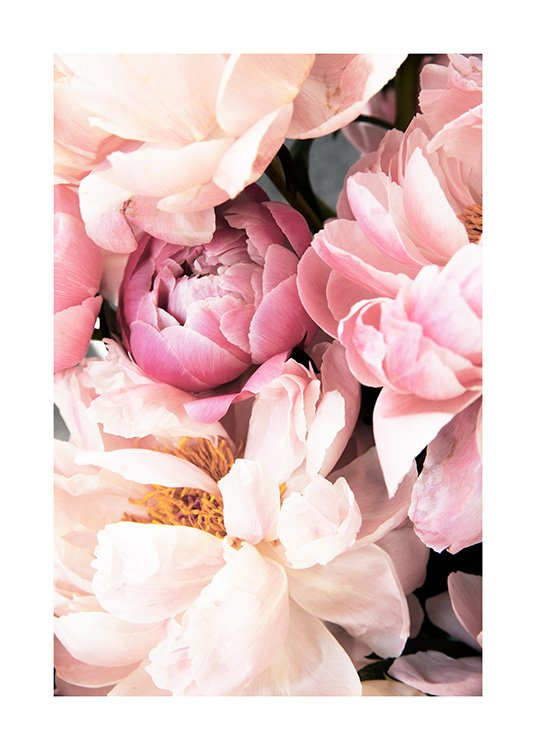 Pink Peonies No2 Poster / Photography at Desenio AB (12905)