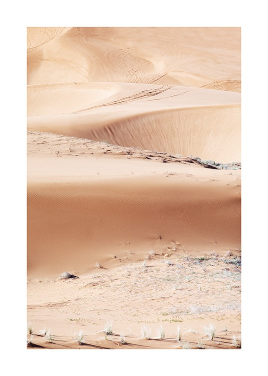 – Photograph of desert and sand dunes with white plants and stones