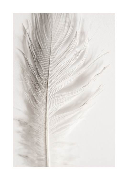 Close up photograph of a white feather on a light grey background